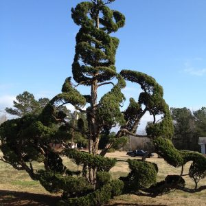 Pearl Fryar Topiary Garden SC photo
