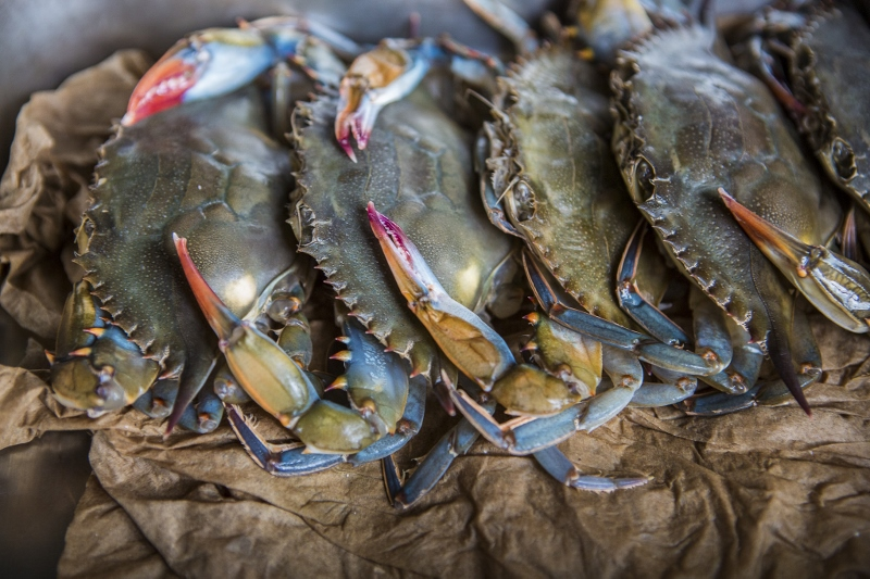 Softshell Crab photo by Forrest Clonts